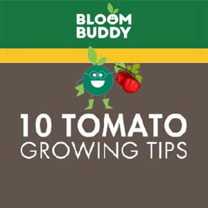 best fertilizer for vegetables